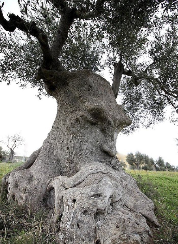 tree elemental bearded man.jpg