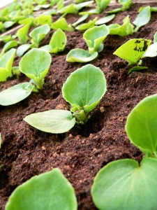 seedling-1369392-639x852