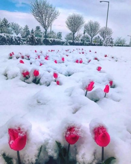 snow flowers.jpg