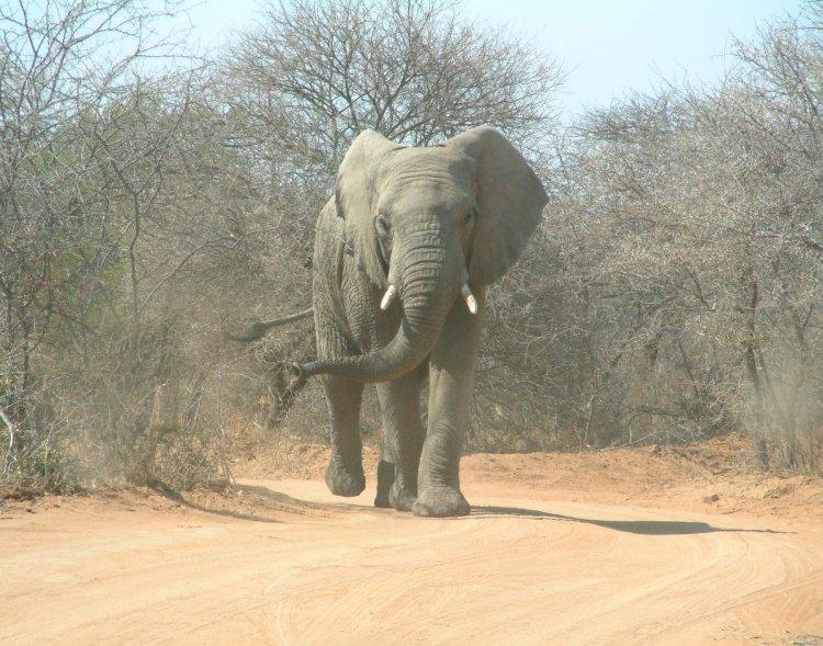 elephants-2-1406080.jpg