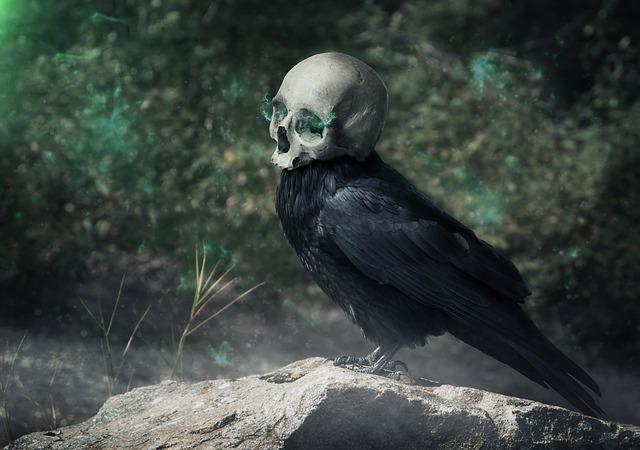 raven-3742189_640.jpg