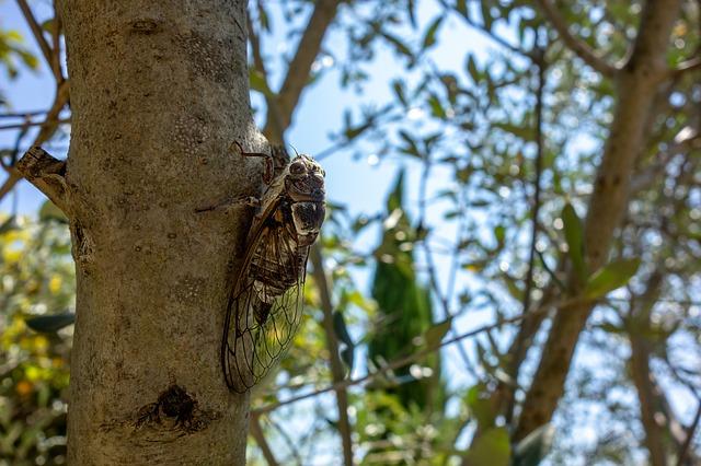 cicada-3603435_640.jpg