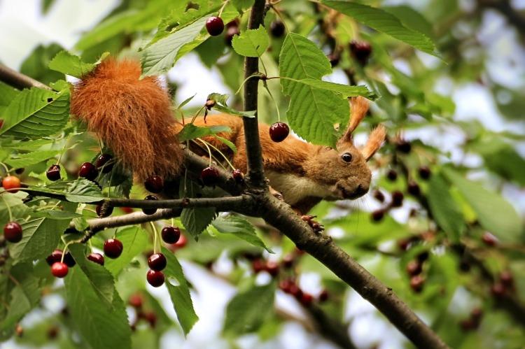 squirrel-1266573_1280.jpg