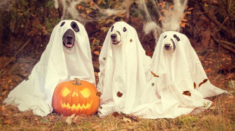 halloween-2870607_1280.jpg