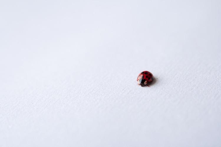 ladybug-691386_1280.jpg
